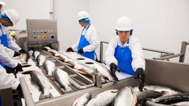 Morrisons-in-need-of-fish-workers-at-Grimsby